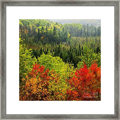 Fall Forest Rain Storm Framed Print by Elena Elisseeva