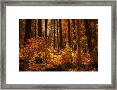 Fall Forest  Framed Print by Saija  Lehtonen