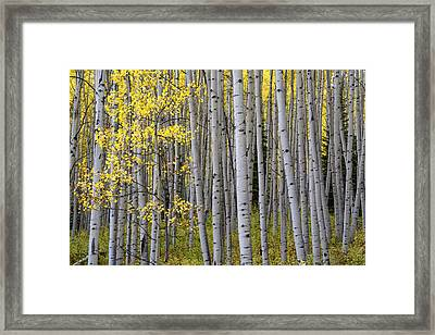 Fall Forest Framed Print