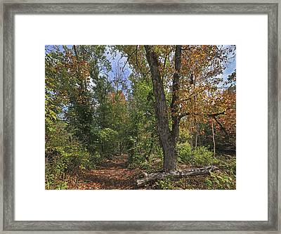 Fall Forest Trail Ozark-saint Francis Framed Print by Tim Fitzharris
