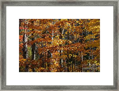 Fall Forest With Orange Leaves Framed Print by Elena Elisseeva