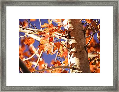 Fall Forever Framed Print
