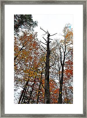 Fall Forrest Framed Print by Stephanie Grooms