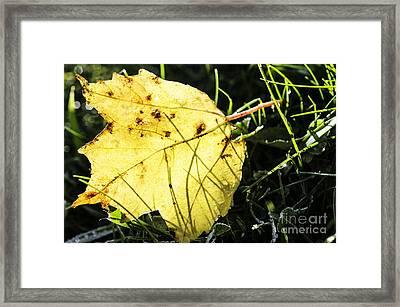 Fall Frost Framed Print by Thomas R Fletcher
