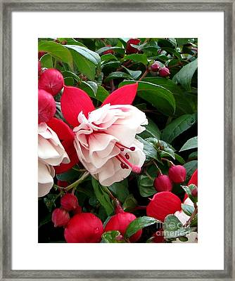 Fall Fuchsia Framed Print by Judyann Matthews