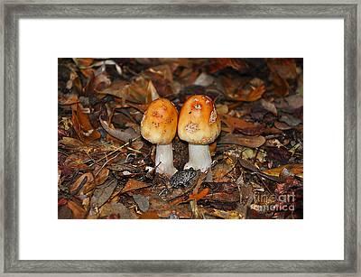 Fall Fungi Framed Print by Al Powell Photography USA