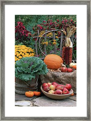 Fall Garden Display, Ornamental Kale Framed Print by Richard and Susan Day