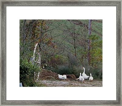 Fall Geese Framed Print by Carol Hoffman