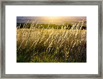 Fall Glow Framed Print