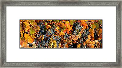 Fall Grapes Dining Room Art Framed Print