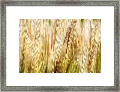 Fall Grass Abstract Framed Print by Christina Rollo