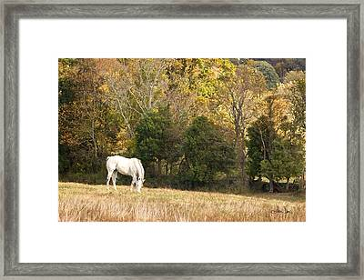 Fall Grazing Framed Print by Joan Davis