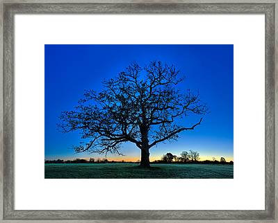 Fall Great Oak At Dawn Framed Print