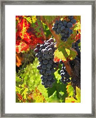 Fall Harvest Framed Print by Ray R Morawski