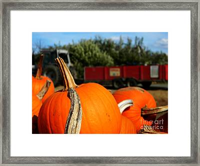 Fall Hayride Framed Print