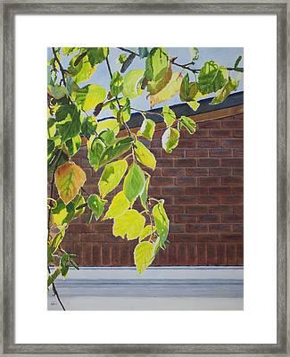 Fall Framed Print by Helal Uddin