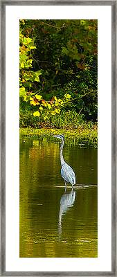 Fall Heron Framed Print