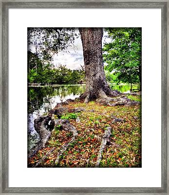 Fall In Audubon Park Framed Print by Ray Devlin