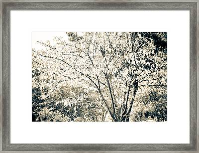 Fall In Black And White Framed Print by Ronda Broatch