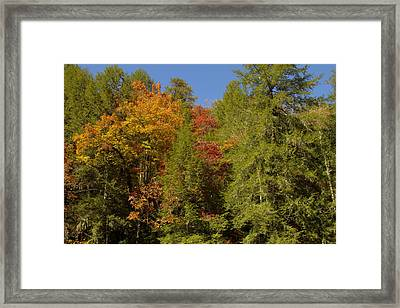 Fall In Bloom Framed Print by Honour Hall