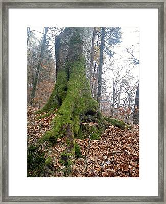 Framed Print featuring the photograph Fall In Burgdorf by Felicia Tica