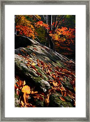 Framed Print featuring the photograph Fall In Gyeryongsan by Brad Brizek