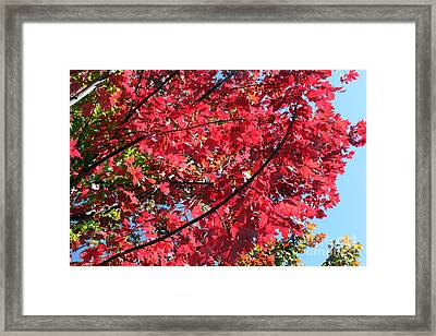 Framed Print featuring the photograph Fall In Illinois by Debbie Hart