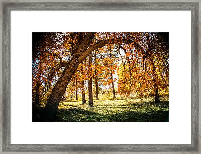 Fall In Laguna Framed Print