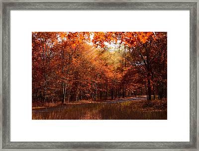 Fall In Light Framed Print