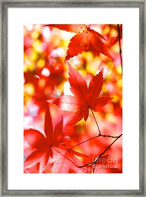 Fall In Love Again Framed Print