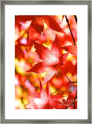 Fall In Love  Framed Print by Jay Nodianos