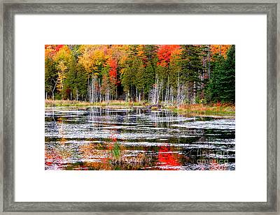 Fall In Maine Framed Print by Arie Arik Chen