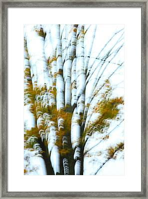 Fall In Motion Framed Print by Karol Livote