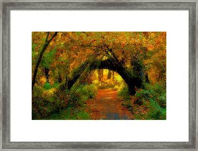 Fall In Olympia National Forest Framed Print