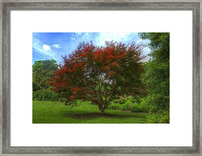 Fall In Summer Framed Print