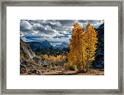 Fall In The Eastern Sierra Framed Print by Cat Connor