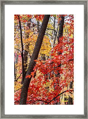Fall In The Forest Framed Print by John Haldane