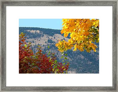 Fall In The Okanagan Valley Framed Print