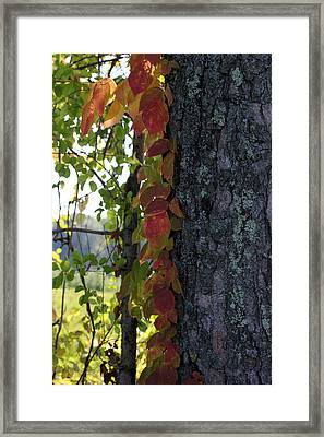Fall In The Orchard 1 Framed Print by Mary Bedy