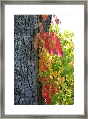 Fall In The Orchard Framed Print by Mary Bedy