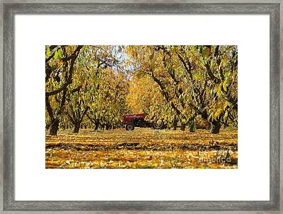 Fall In The Peach Orchard Framed Print by Jim and Emily Bush