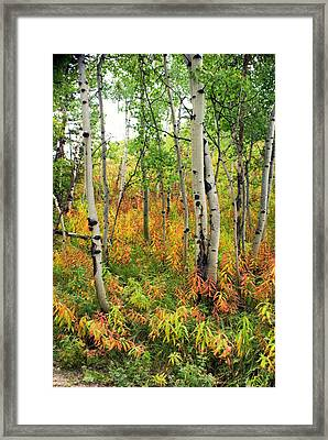 Fall In The Tetons Framed Print by Marty Koch