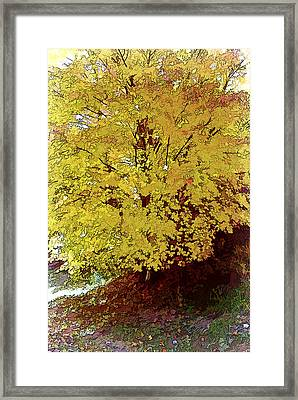 Fall In Yellow Framed Print by Larry Bishop