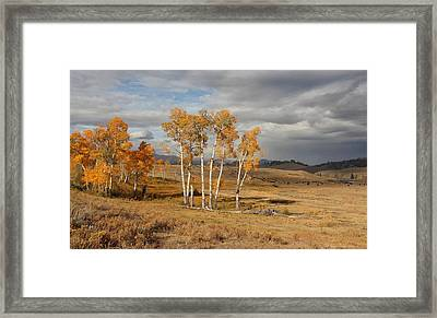 Fall In Yellowstone Framed Print by Daniel Behm
