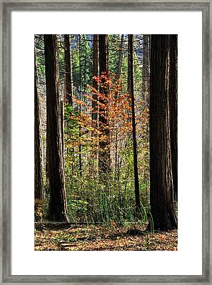 Fall In Yosemite Framed Print by Cat Connor