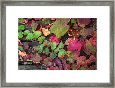 Framed Print featuring the photograph Fall Ivy by Wayne Meyer