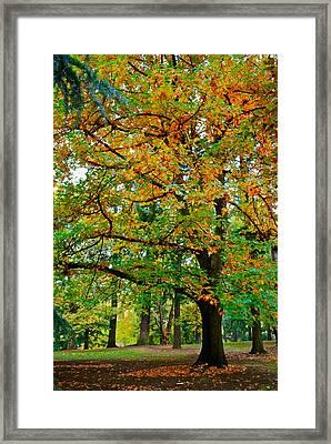 Fall Kissing The Leaves  Framed Print by Rae Berge