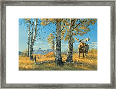 Fall Landscape - Moose Framed Print by Paul Krapf