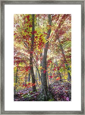 Fall Laser Beams Framed Print by Debra and Dave Vanderlaan