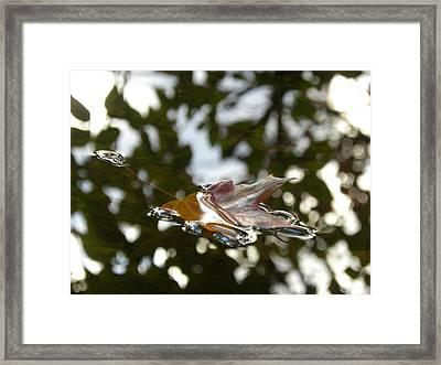 Fall Leaf In Stream Framed Print by Sheri Lauren Schmidt